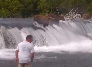 Stupide toerist te dicht bij wilde bruine beren