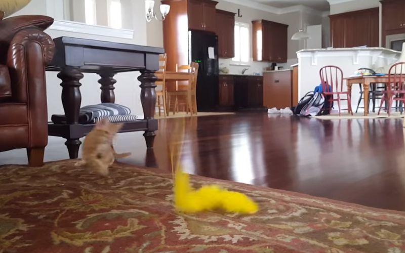 De beste grappige katten compilatievideo
