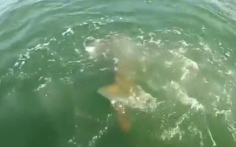 Er is altijd een grotere vis