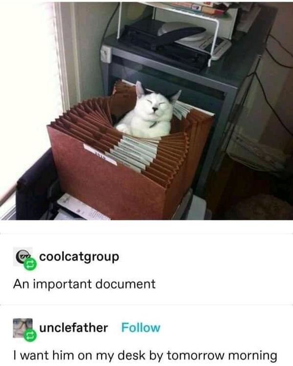 Een goed gedocumenteerde kat