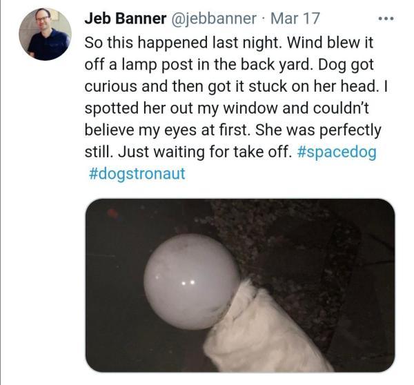 Hond met lamp op hoofd