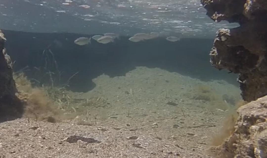 Vrouw vindt trouwring tijdens duiken, zit om een vis heen