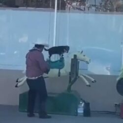 Hondje cowboy gast vermaakt zich uitstekend op automatisch hobbelpaard
