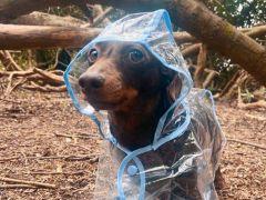 Honden in regenjassen zijn grappig en schattig