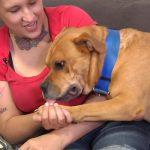Vrouw wil hond adopteren, vindt eigen hond terug in het asiel