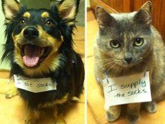 25 hilarische Animal Shaming Foto's