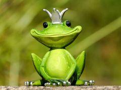 Comedy Wildlife Photgraphy Awards